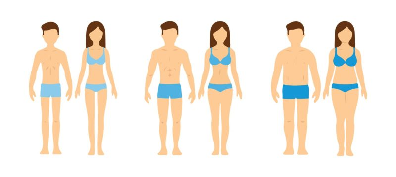 3 different body types